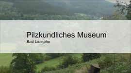 Pilzkundliches Museum - Video